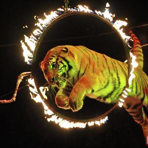 Цирки Луха
