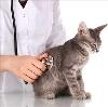 Ветеринарные клиники в Лухе